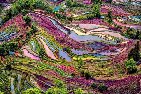 Çin'de Gezilecek Yerler - Yuanyang Pirinç Tarlaları, Yunnan