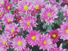 Chengde Çiçekler